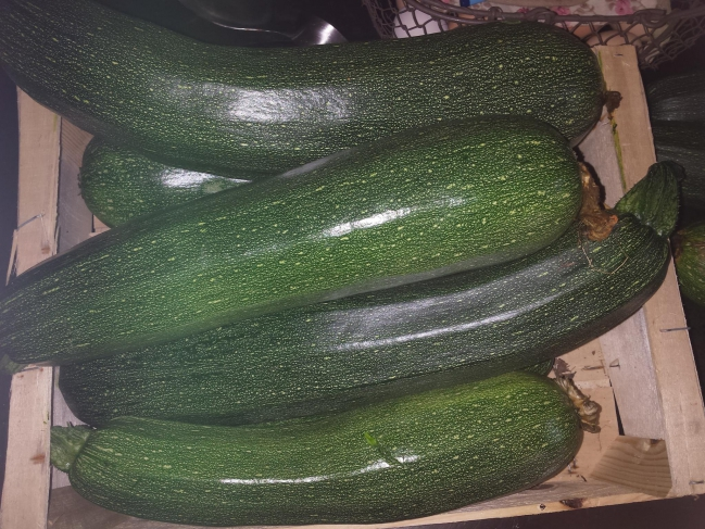 mes courgettes.jpg