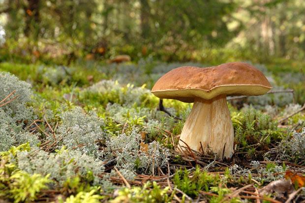 p-gde-baies-champignons.jpg