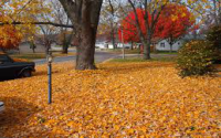 dropped-leaves