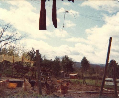 1979 (max) la basse-cour..jpg