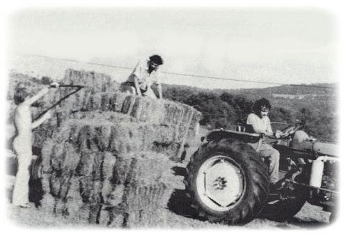 1978. Les foins de Dhagpo avec Pierrot, Jean-Pierre et Petit Louis.