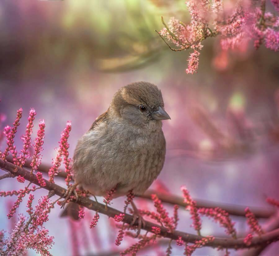 L'oiseau.jpg