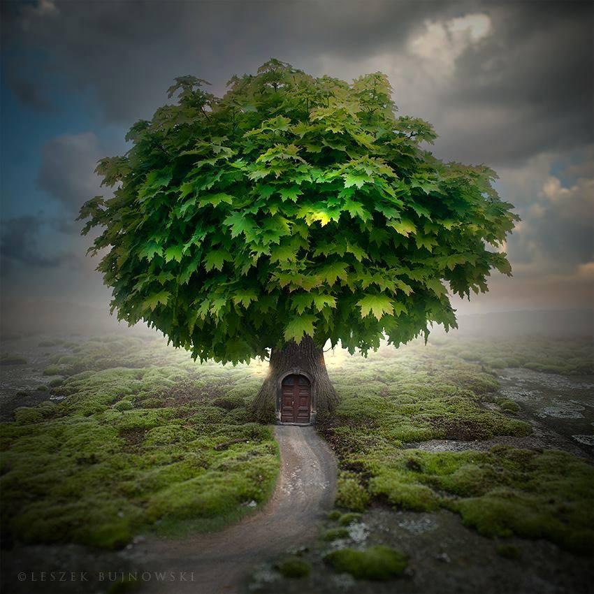 maison a meme l'arbre et verdure.jpg