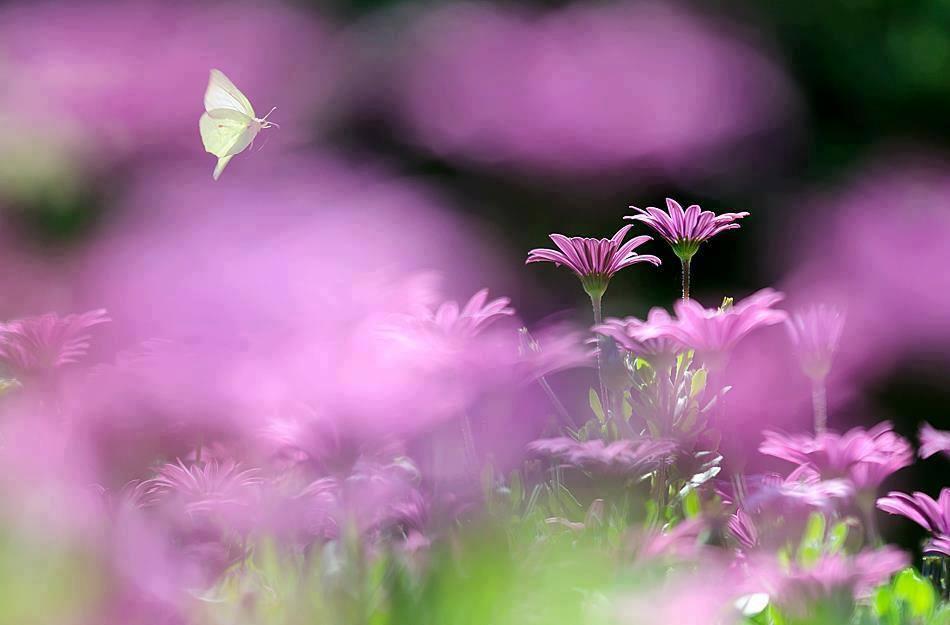 rose fleur papillon.jpg