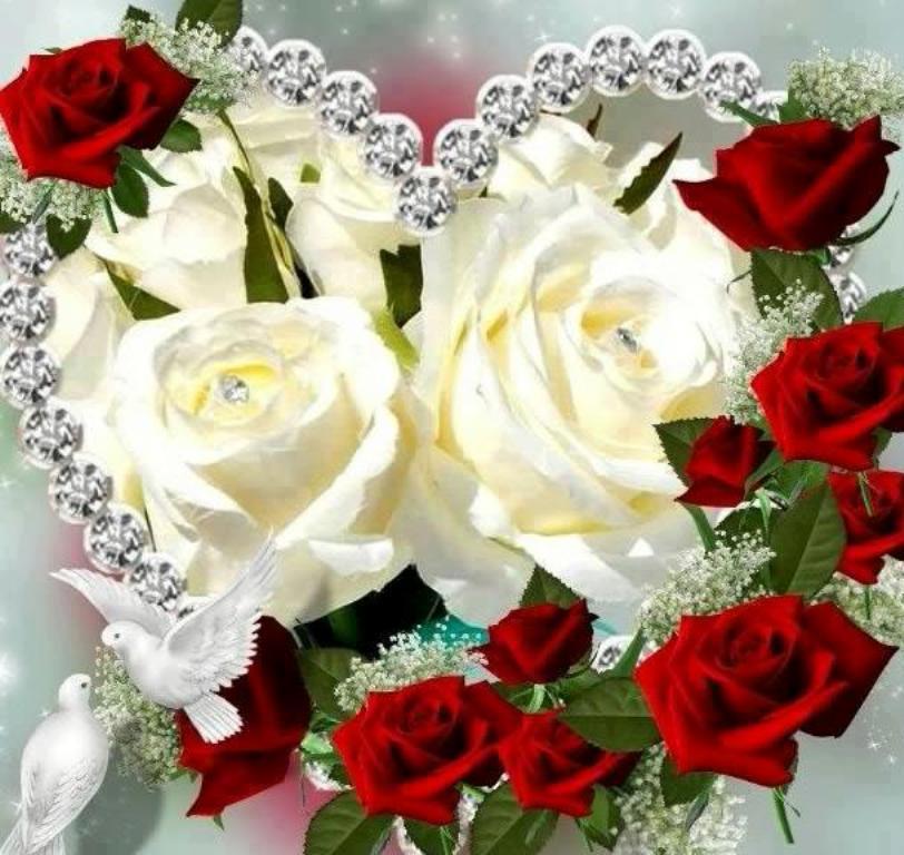 rose rouge et blanche.jpg
