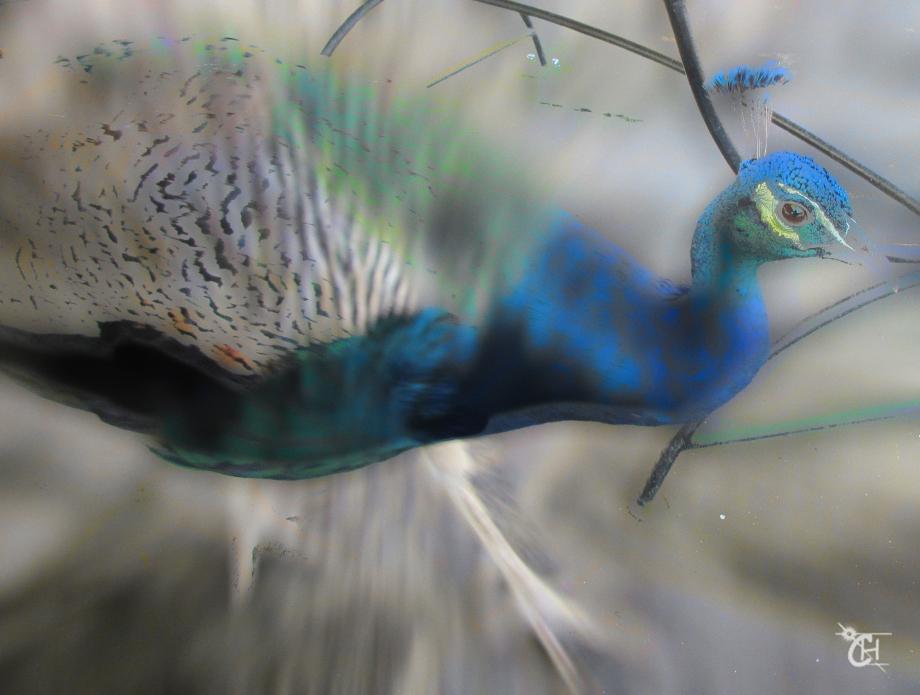 Bird blue.jpg