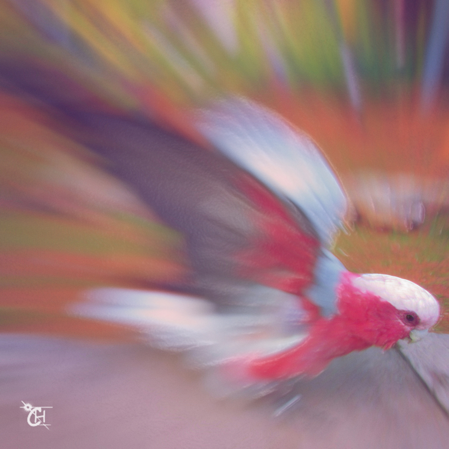 Birdy multi.jpg