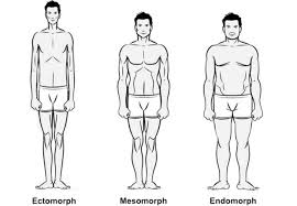 morphologies.jpg