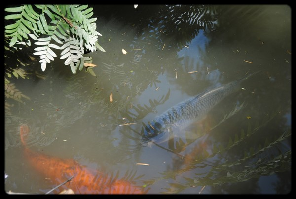 poissons en eaux troubles.JPG