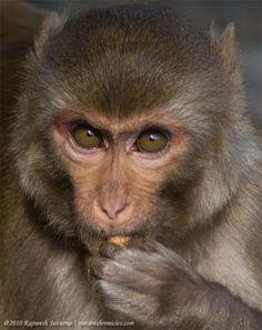 Monkey stare.jpg