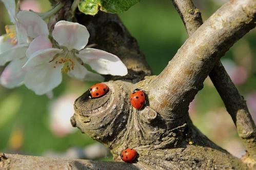 ladybug-722783_640(1).jpg