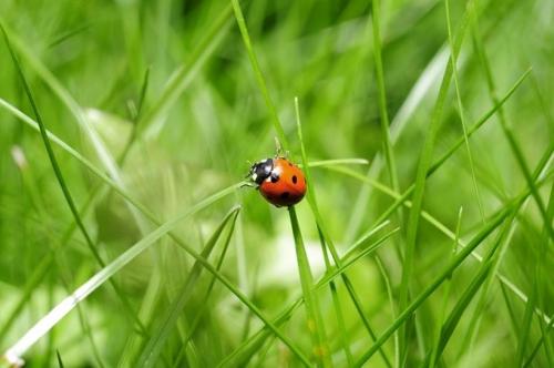 ladybug-796481_640(1).jpg