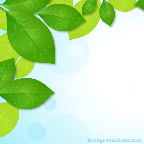 green-leaves-frame-background.jpg