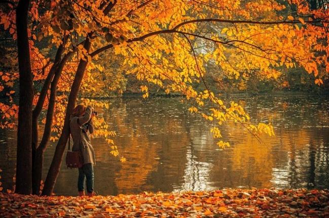 autumn-691263_640(1).jpg