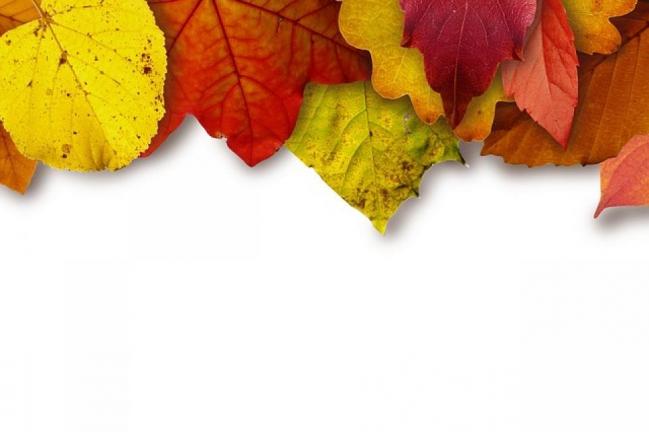 leaves-183414_640(1).jpg