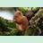 10127440-l-ecureuil-dans-les-parcs-et-jardins.png