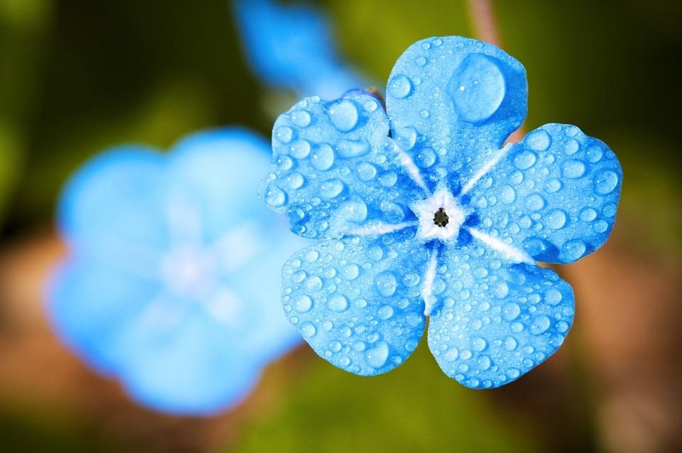 flower-2197679_960_720.jpg