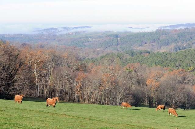 15 - Les brumes matinales au-dessus de la vallée de la Dordogne.jpg