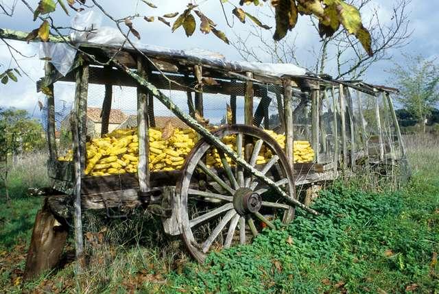 18 - Pesset - Vieille charette transformée en réserve à maïs (aujourd'hui disparu).jpg