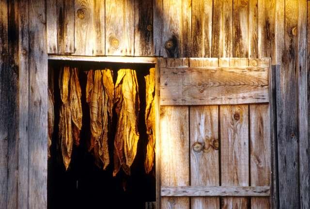 19 - Hangar de séchage à tabac.jpg