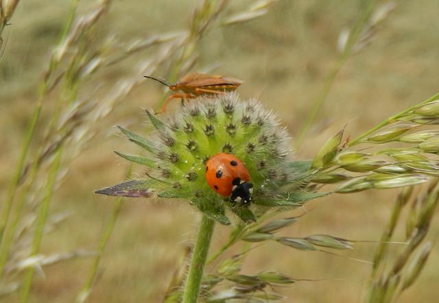 ladybug-375227_640.jpg