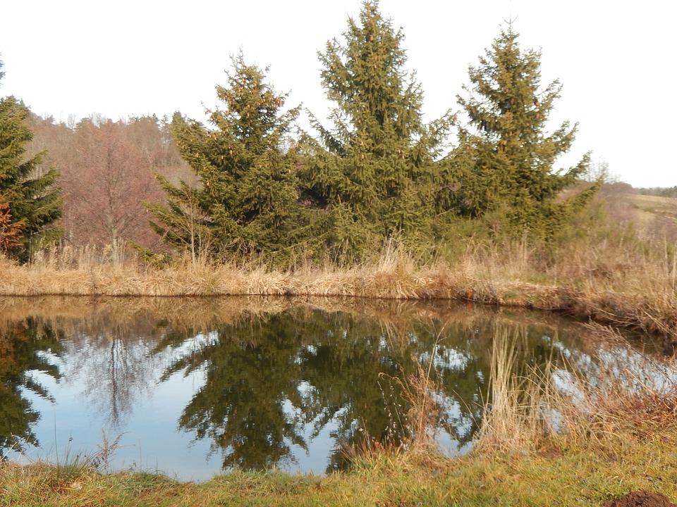 pond-1121644_960_720.jpg