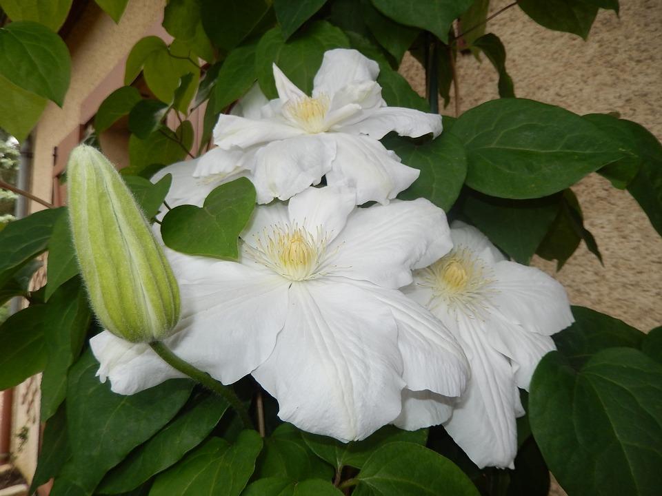 flowers-1418189_960_720.jpg