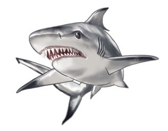 sharks-co-requin-bouledogue.jpg