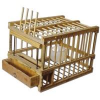 cage grive bois trappe (Copier).jpg