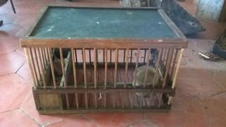 cage grives bois et toile (Copier).JPG
