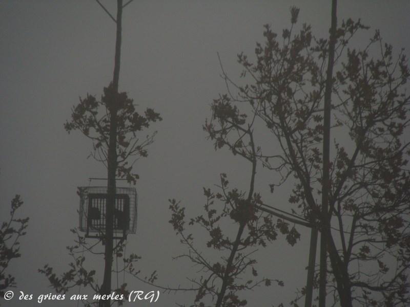 N° 6 Ramageuse dans la brume (Copier).JPG