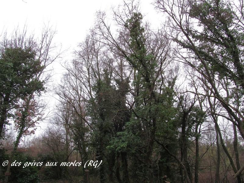Les arbres de pose (Copier).jpg