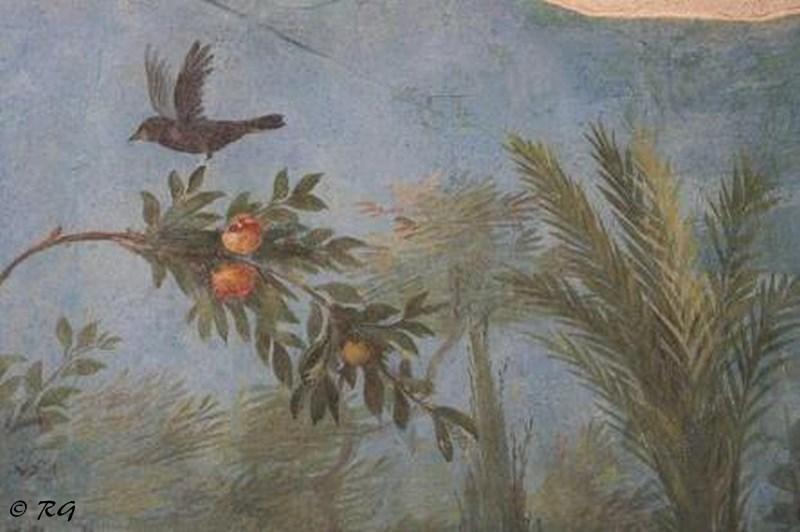 Grive Palazzo Massimo 5.jpg