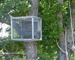 Cage anti-rapaces 1 (Copier).jpg