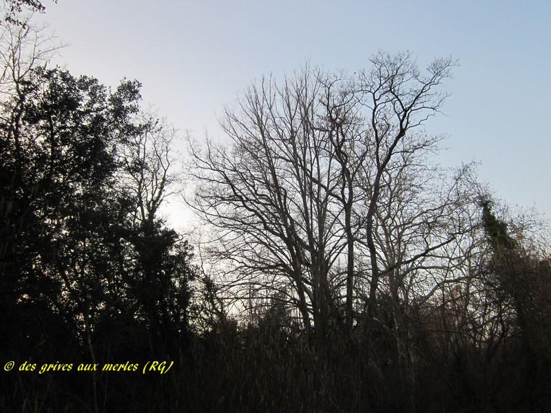 4 Les arbres de pose (Copier).JPG