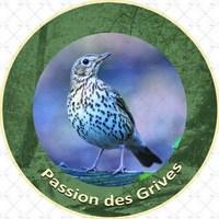 Passion des grives 1 (Copier).jpg