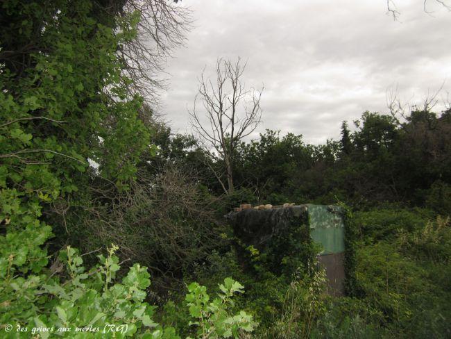 Chateauneuf de Gadagne (84). Les arbres de pose.