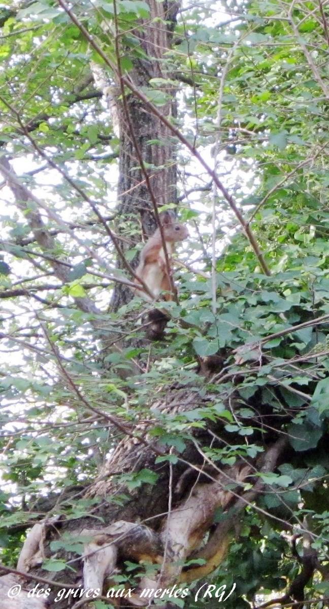 Et revoilà notre écureuil...
