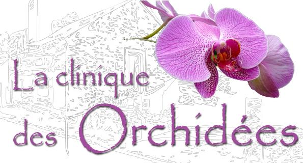 La-Clinique-des-Orchidees - 36 - Martine Poirier