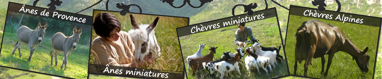 www.ferme-des-tourelles.net - Suite pastoralisme minichèvres 2015