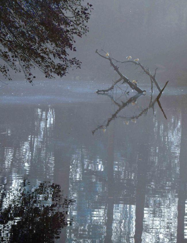 Reflets d'automne : parc de Bourran à Mérignac