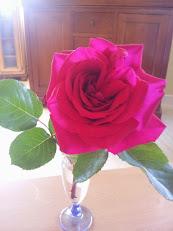 La rose et le poete.jpeg