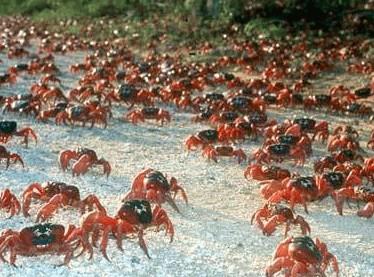 crabe2.jpg