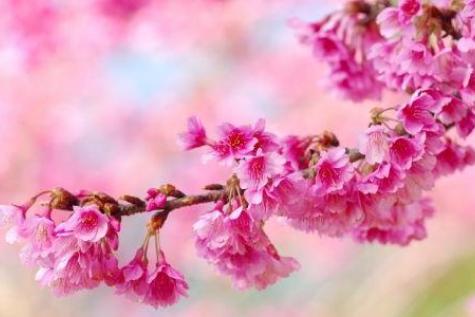 fleur-rose-contact.jpg