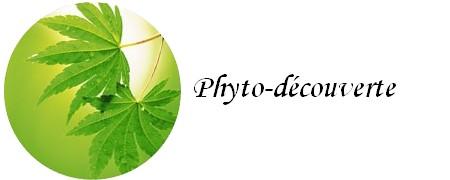 phytodecouverte.jpg
