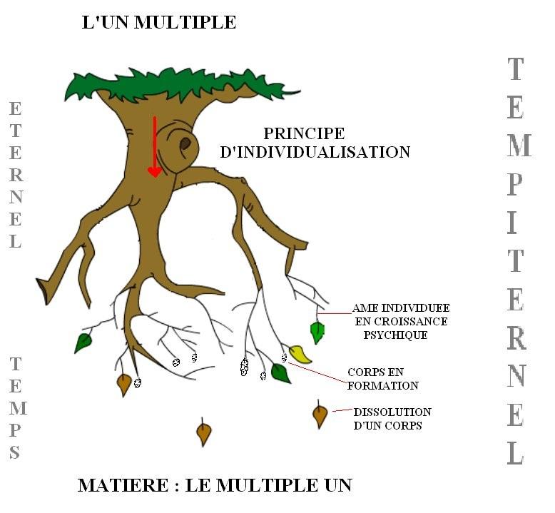 PRINCIPE INDIVIDUALISATION 1.jpg