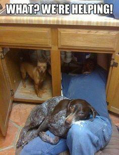 Sink Dogs.jpg
