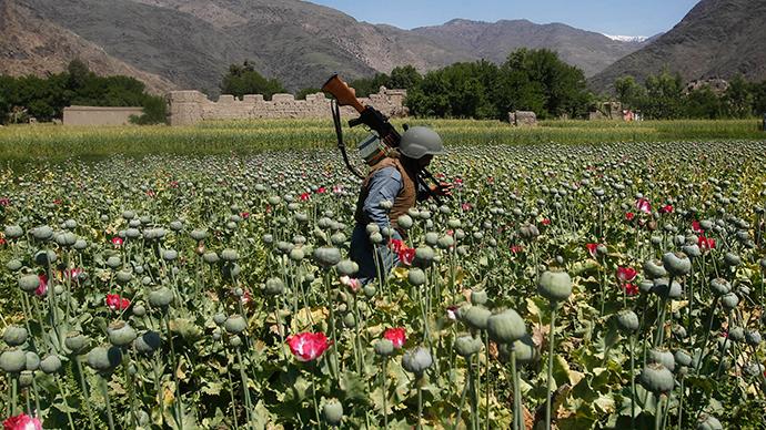 Opium poppies a soldier Afghanistan.jpg