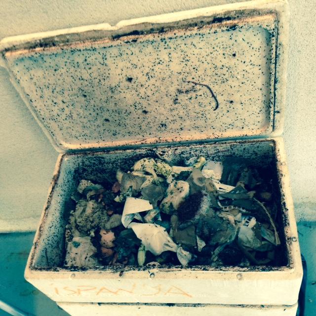 compost inside.jpg