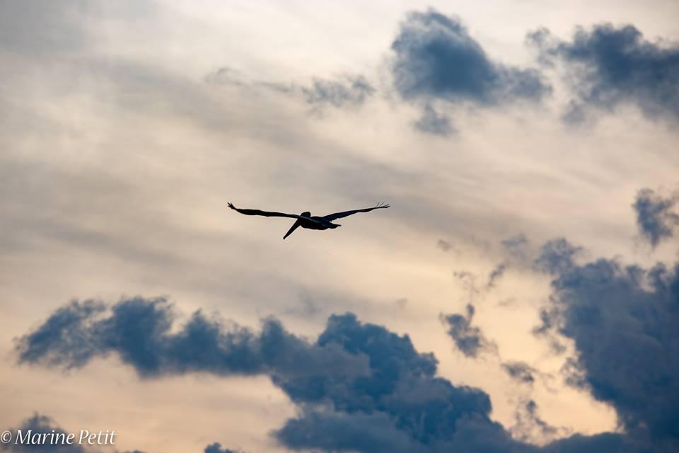 Les nuages bouchent le ciel Et assombrissent les chemins Les oiseaux ont ouvert leurs ailes Ils iront voir un peu plus loin  Les lapins au fond de leur trou Attendront que cesse la pluie Et moi, je ne vois pas le bout Des longues heures de la nuit  Ici, chacun fait ce qu'il peut Au fond du trou ou dans le ciel Tout seul, parfois aussi à deux Ça dépend si on fait du zèle  Les nuages bouchent le ciel Les piafs et les lapins s'en foutent Comme des neiges éternelles Là-bas, tout au bout de la route  Où mes doutes vont en silence Vers un avenir incertain Une autre issue, une autre errance À défaut d'un autre destin  Les nuages bouchent le ciel Là, juste au-dessus de nos têtes Ils vont, viennent et s'amoncèlent Serait-ce pour faire la fête ?  Pour éteindre un rêve naissant ? Ou semer un nouvel espoir ? Parce que nous sommes vivant Encore au moins jusqu'à ce soir  ©Un espace de poésie